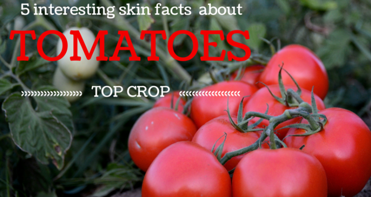 Top Crop – TOMATOES!